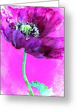 Purple Poppy On Pink Greeting Card