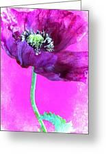 Purple Poppy On Pink Greeting Card