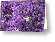 Purple Screen Square Greeting Card