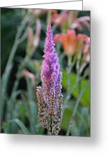 Purple Spear Greeting Card