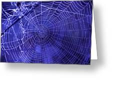Purple Spiderweb Greeting Card