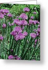 Purple Spikes Greeting Card