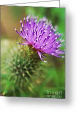 Purple Spikes Greeting Card