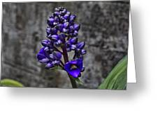 Purple Splendor Greeting Card