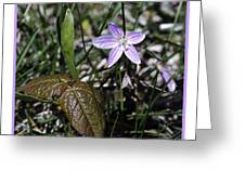 Purple Spring Trail Flower Greeting Card