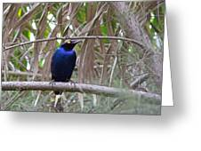 Purple Starling Greeting Card