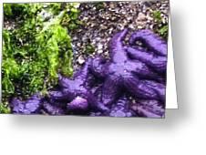 Purple Stars Greeting Card