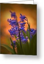 Purple Sunset Greeting Card