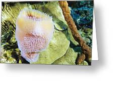 Purple Vase Sponge Greeting Card