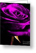 Purple Velvet Rose Greeting Card by EGiclee Digital Prints