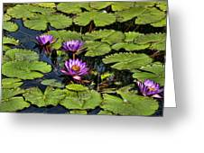Purple Water Lilies - Nymphaea Capensis  Greeting Card