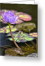 Purple Water Lilly Greeting Card