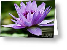 Purple Petals Water Lily Greeting Card