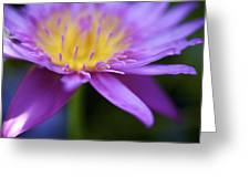 Purple Water Lily Petals Greeting Card