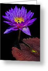 Purple Waterlily Greeting Card