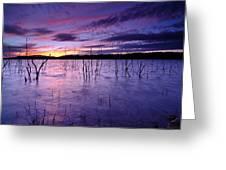 Purple Waters Greeting Card