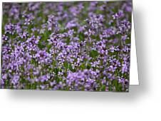Purple Wildflowers Square Greeting Card