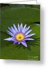 Purple Yellow Lotus Flower Greeting Card
