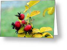Pyracantha Berries Life Greeting Card