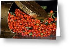 Pyracantha Berries Greeting Card