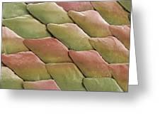 Python Skin, Sem Greeting Card