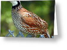 Quail I Greeting Card