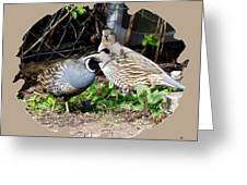 Quail Mates Greeting Card
