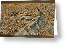 Quail On Rock Greeting Card