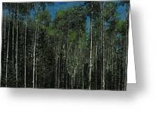 Quaking Aspens Greeting Card