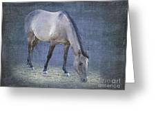 Quarter Horse In Blue Greeting Card by Betty LaRue