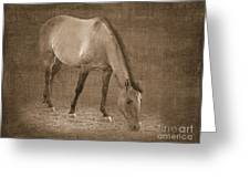 Quarter Horse In Sepia Greeting Card by Betty LaRue