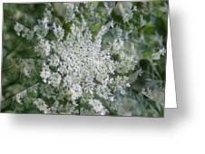 Queen Anne Pin Wheel Greeting Card