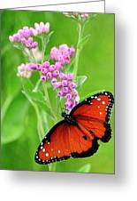 Queen Butterfly And Pink Flowers Greeting Card