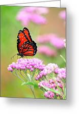 Queen Butterfly Sitting On Pink Flowers Greeting Card