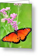 Queen Butterfly Wings With Pink Flowers Greeting Card
