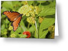 Queen Of The Lantana Greeting Card