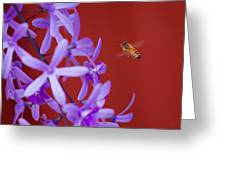 Queen's Wreath Honey Bee Greeting Card