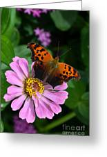 Question Mark Butterfly And Zinnia Flower Greeting Card