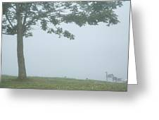 Quiet Fog Rolling In Greeting Card