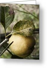 Quince Fruit Greeting Card