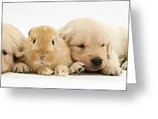 Rabbit And Puppies Greeting Card by Jane Burton