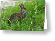 Rabbit Eating Grass In The Forest Greeting Card