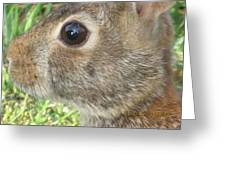 Rabbit Eye Greeting Card