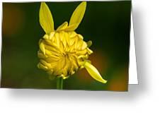 Rabbit Flower Greeting Card