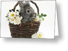 Rabbit In A Basket With Flowers Greeting Card