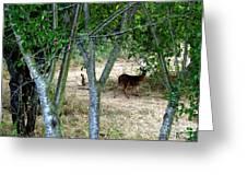 Rabbit Spying On Buck In Velvet Greeting Card by The Kepharts