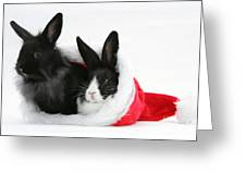 Rabbits In Hat Greeting Card