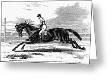 Race Horse, 1857 Greeting Card