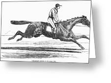 Racehorse, 1856 Greeting Card