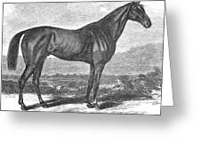 Racehorse, 1867 Greeting Card